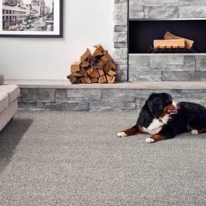 Dog on Carpet | Shelley Carpets